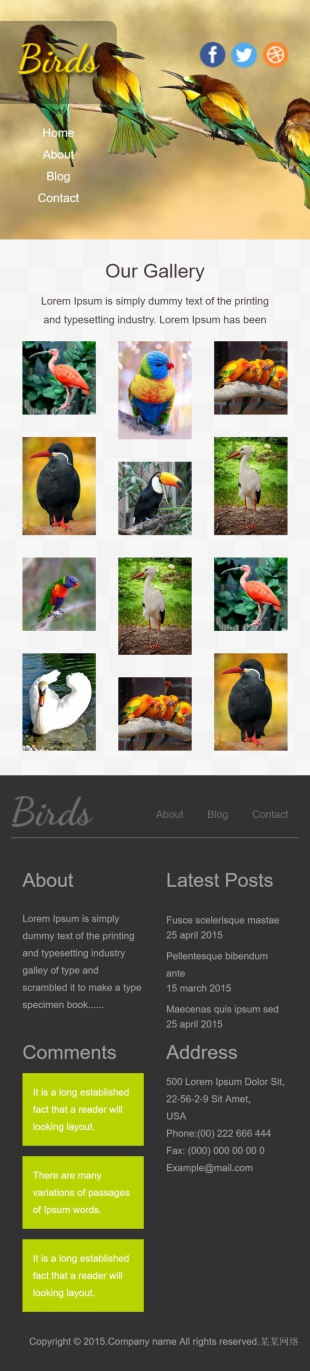 鸟类保护网站英文模板建设手机图片