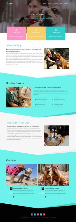 宠物美容企业网站整站英文网站建设模板电脑图片