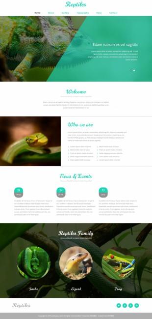 动物世界漂亮简洁清爽英文网站模板制作电脑图片