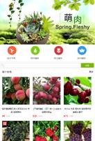 小型盆景多肉类网站制作模板手机图片